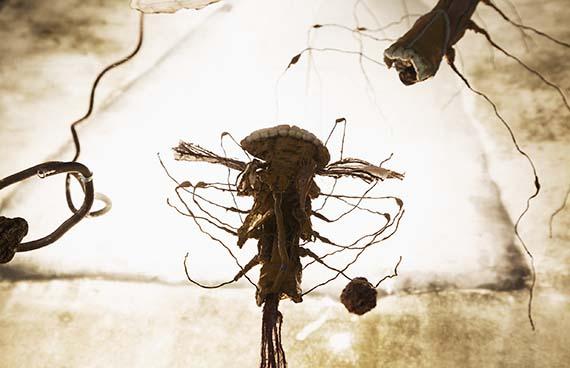 Annika Liljedahl – Insekt Insikt