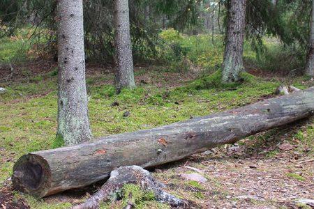 Foto av en stock i skogen