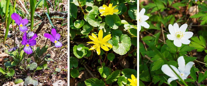 Collage av vårblommor i naturen
