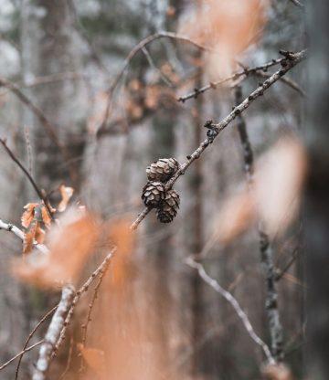 Upptäck höstskogen